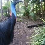 Adelaide Zoo_6
